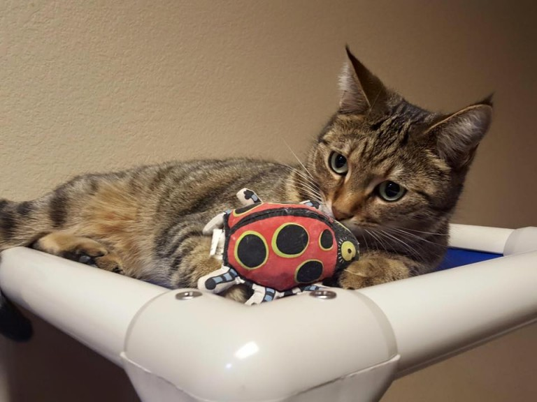 cat toys for smart cats
