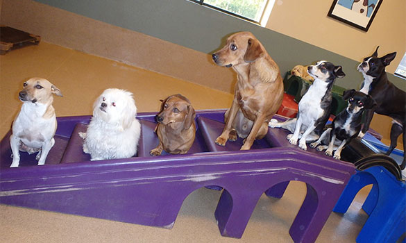 Doggie Day Care